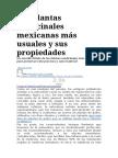 Las Plantas Medicinales Mexicanas Más Usuales y Sus Propiedades