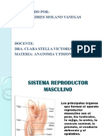 Sistema Reproductor y Excretor
