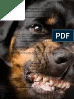 Agresividad Canina (2)