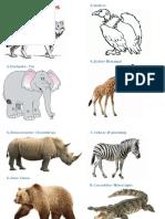 Animales Salvajes en Kaqchikel