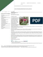 Salvia Quitensis