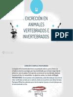 Excrecion en Animales