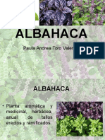 albahaca presentación