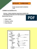 2.a.morfologi Tumbuhan