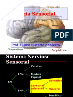 fisiologiasensorial-091021195921-phpapp01.pptx