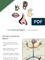 LA FUNCIÓ DE RELACIÓ-PRIMARIA