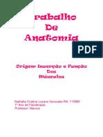 70508784-Musculos-origem-insercao-e-funcao.pdf