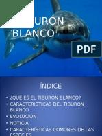 Tiburon Fernando