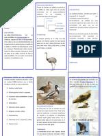 CLASIFICACIÓN DE LAS AVES  triptico.docx