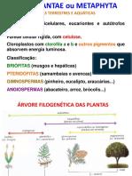 7 Reino Plantae Exercícios
