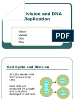 cell division and dna replication