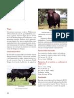 09Brangus.pdf