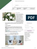 Gardenia—How to Grow Gardenia Indoors