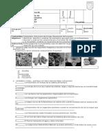 Fotosíntesis actividad