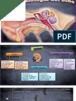 Clase 1 Presentación1 Anatomo Fisiologia Del Oido Externo
