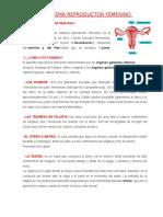 El Sistema Reproductor Masculino