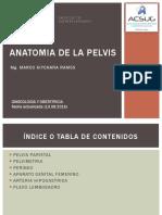03 Anatomia de Pelvis