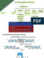 7 Biotecnologia