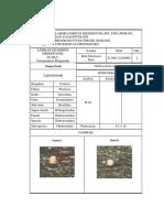 Laporan Praktikum Foraminifera Plangtonik