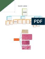 aplicatie 4.pdf