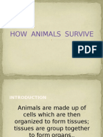 How Animals Survive