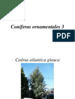 Coniferas ornamentales 3