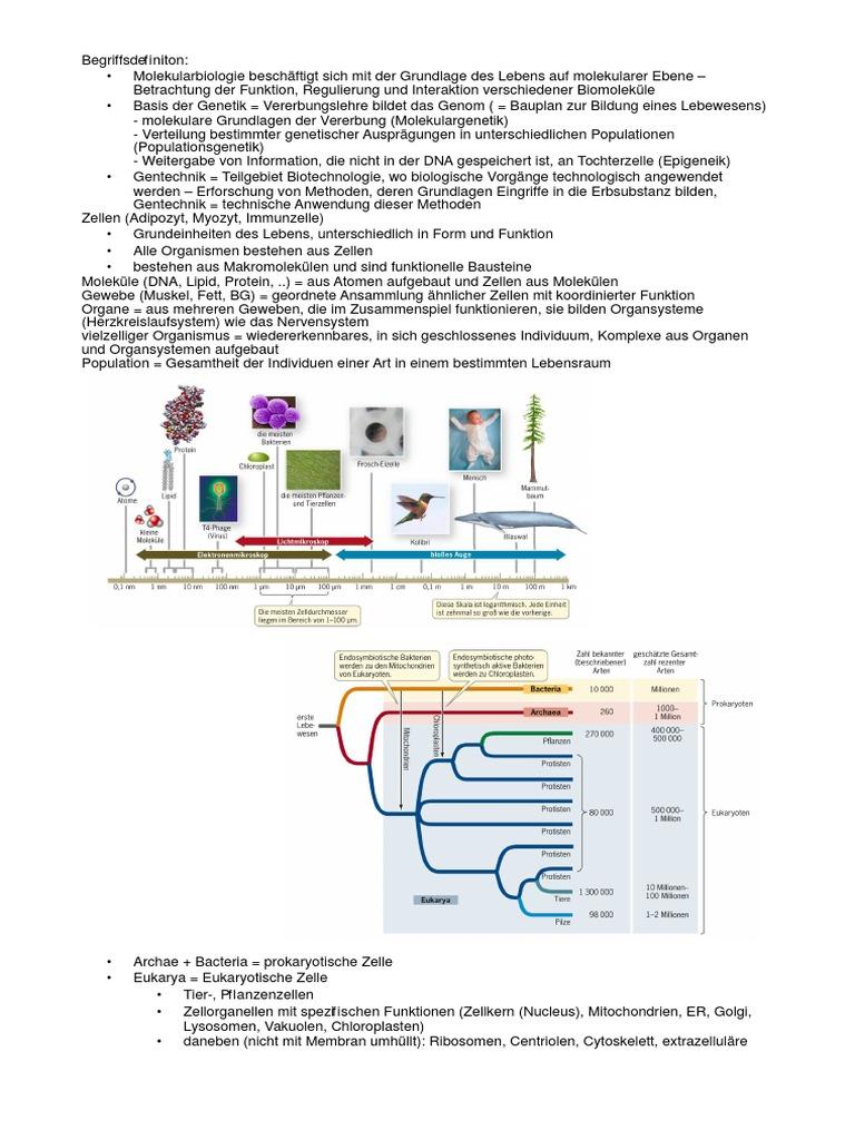 Schön Prokaryotische Und Eukaryotische Zellen Arbeitsblatt ...