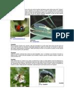 Una Din Cele Mai Bune Metode de a Tine Sub Control Insectele Daunatoare Pentru Plante Este Sa Fim