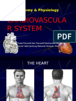 anatomi-jantungt