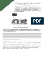 Guía de Trabajo Membrana Plasmática 8ªaño Basico