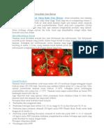Cara Budidaya Tomat Yang Baik Dan Benar