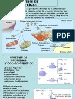 Sintesis de Proteinas 2