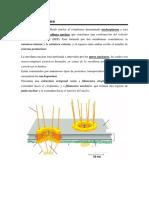 EXTRATema 8. Estructura Del Núcleo