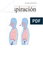 Respiració1 PROYECTO HECTOR LUNA 31