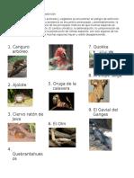 ANIMALES CASI EXTINTOS