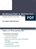 Neuroanatomy & Physiology