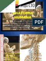 Anatomia 1v.pptx