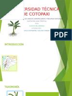 Cultivodelbanano1 151110173530 Lva1 App6892