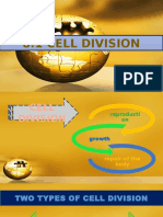 Cell Division - Cell Cycle - Signal Transduction Pathways - Movement