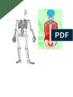 271612208-Cavidades-y-Segmentos-del-cuerpo-humano-esquema.doc