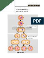 BC 09 - División Celular II