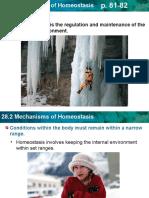 28 2-homeostasis
