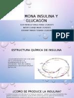 Hormona Insulina y Glucagón