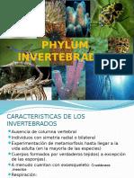 Phylum Invertebrados