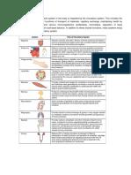 Circulatory_20Pathways-STUDENT.docx