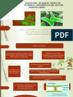 Bacterias Endofitas