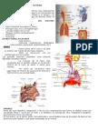 Estructura y Funcion Del Sistema Respiratorio