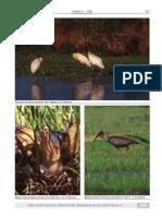 13- El Bagual - Laminas aves.pdf