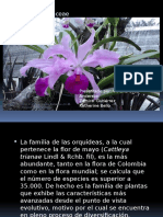 Familia Orchidaceae Mundo de Plantas