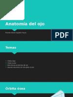 Anatomía del ojo.pptx